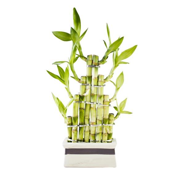 Vaso com bambu vasos e insensarios en elaborados en bambu - Canne bambu in vaso ...