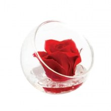 st-r50red_gifts_living_nad_idee_regalo_originali.jpg